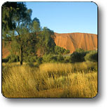 Uluru - Kata Tjuta National Park - Tourism Cairns